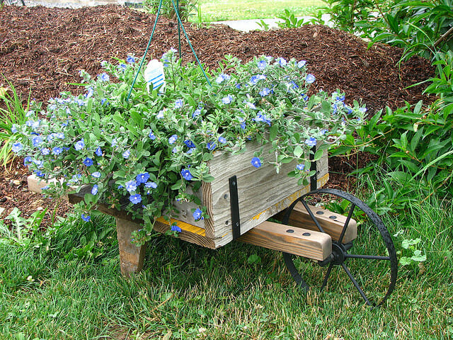 Wooden wheelbarrow with hanging basket of blue eyes | The Micro Gardener